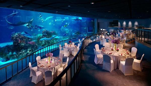 Nhà hàng ngay bên trong thủy cung